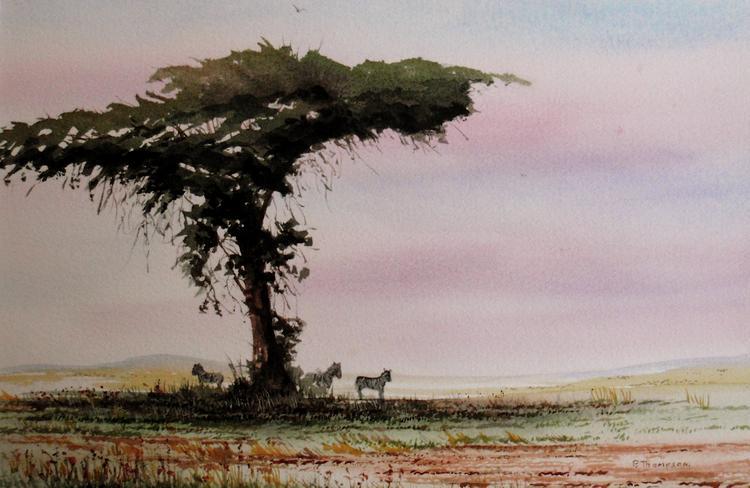 Shade tree Amboseli Kenya